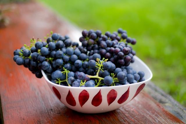 【ワイン品種のご紹介】~ピノノワール~どんな特徴?合わせる料理は何がおすすめ?